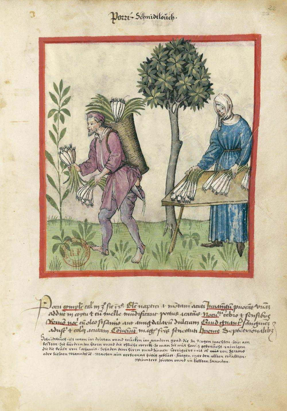 f. 22r, Porri. Tacuinum Sanitatis, Ms. Lat. 9333. Bibliothèque nationale de France, Parigi