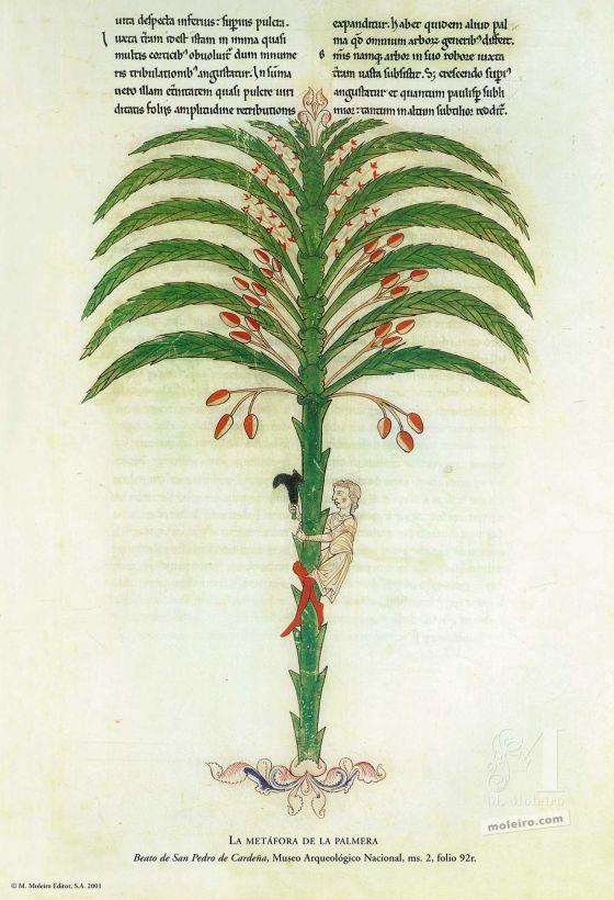 12 pósters de los Beatos de Liébana. La metáfora de la palmera (folio 92), Beato de Liébana, códice de San Pedro de Cardeña