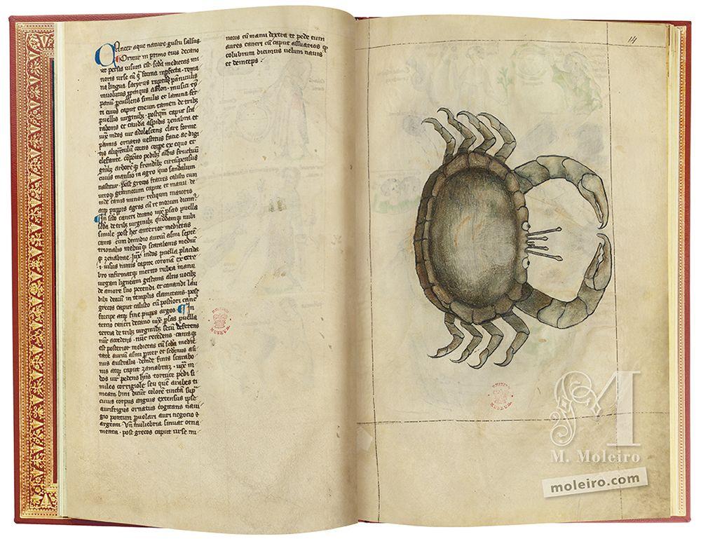 Câncer, Tratado de Albumasar (Liber astrologiae) British Library, Londres