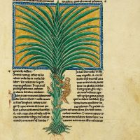 f. 89r, The palm tree of the just