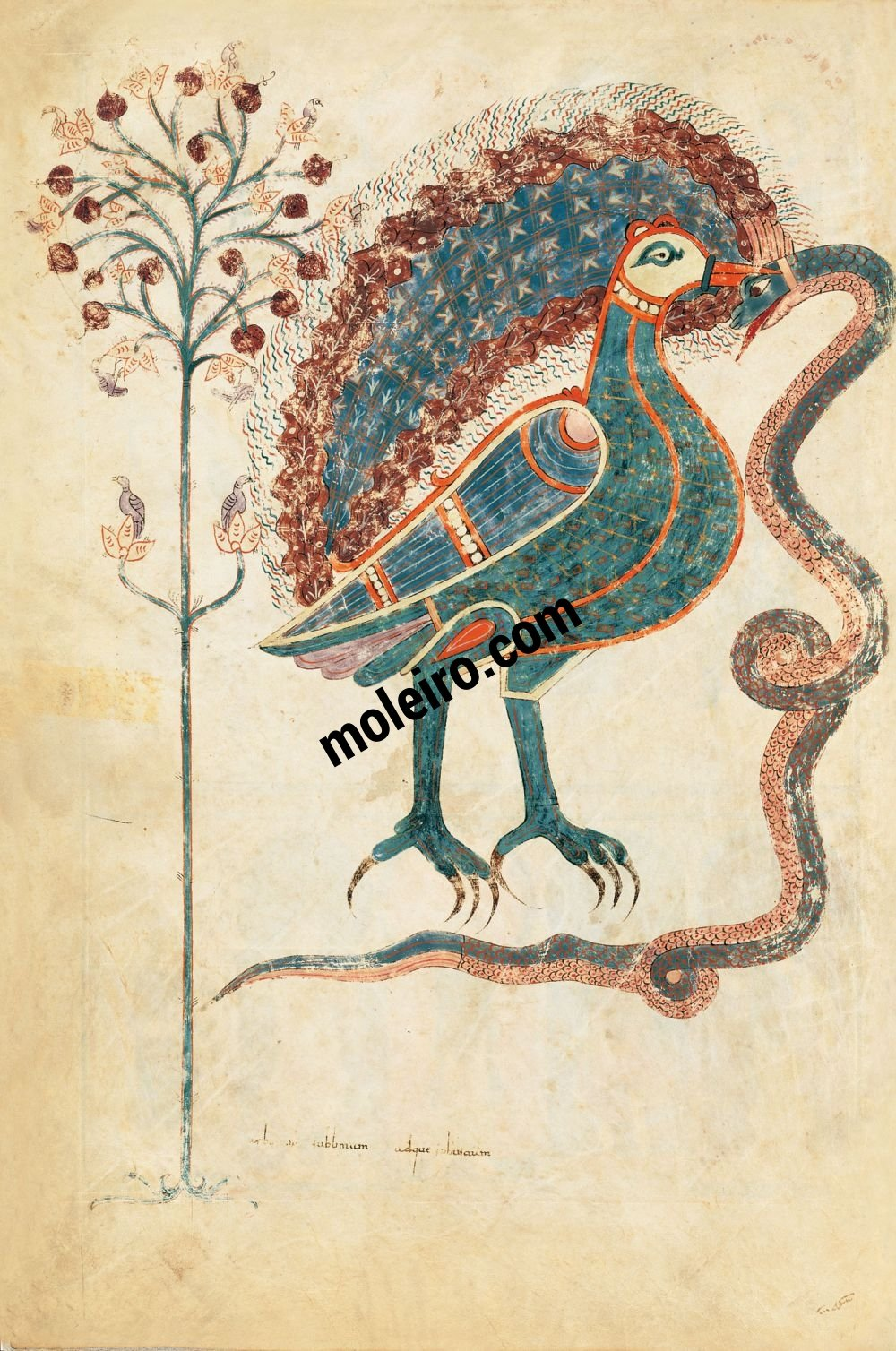 F 18v allegorical conclusion of the christological cycle the f 18v allegorical conclusion of the christological cycle the bird and the snake biocorpaavc
