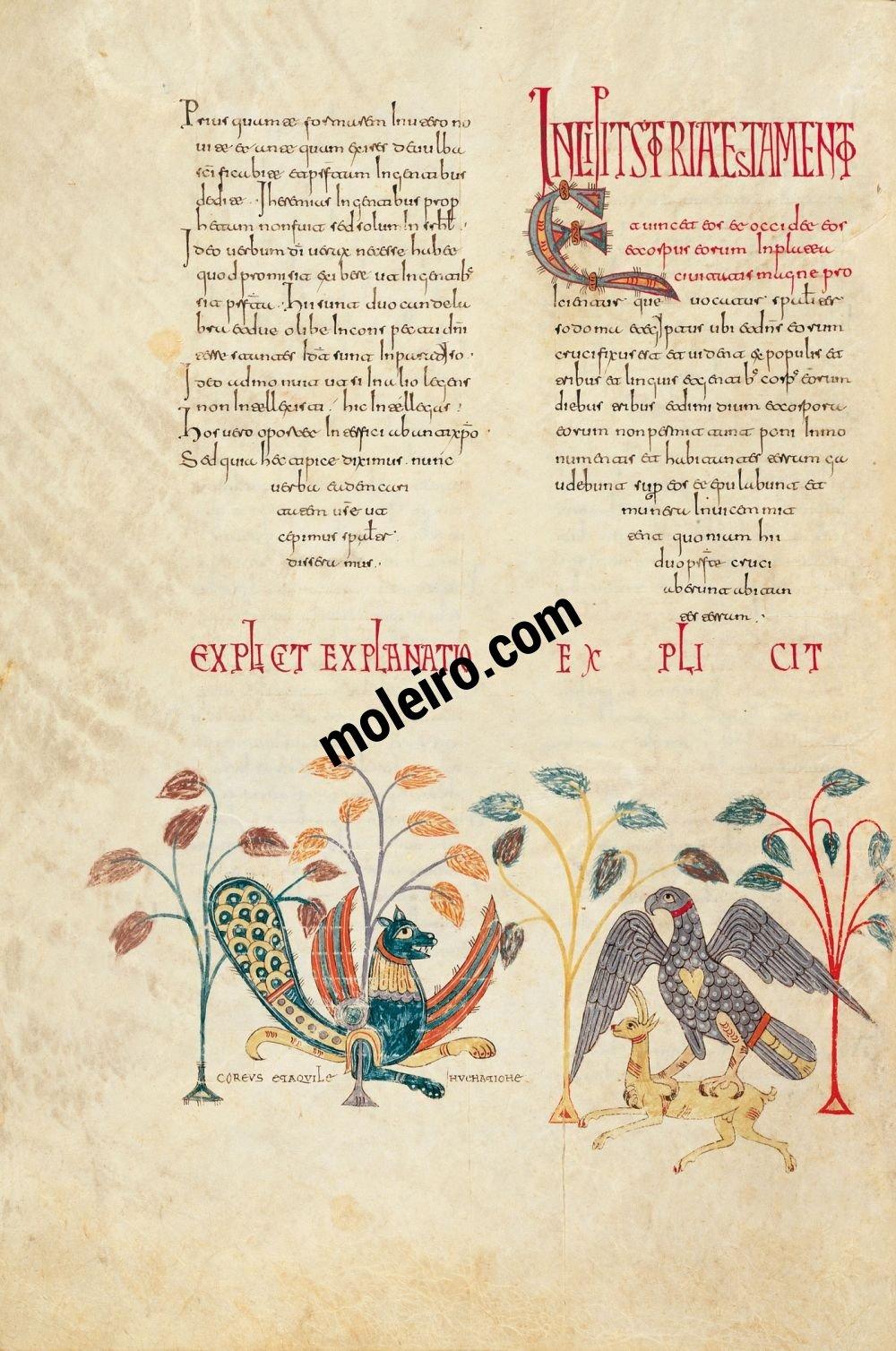 Beato de Liébana, códice del Monasterio de San Salvador de Tábara, Zamora f. 165v, Miniatura decorativa: Coreus y el águila cazando la gacela