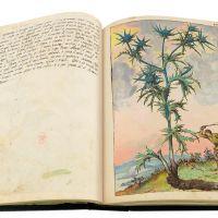 L'eringio (Eryngium), cc. 46v-47