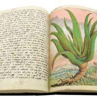 Aloe (Aloe), cc. 143v-144