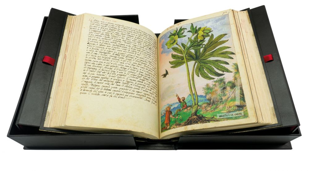 Mattioli´s Dioscorides illustrated by Cibo manuscript presented on its display case