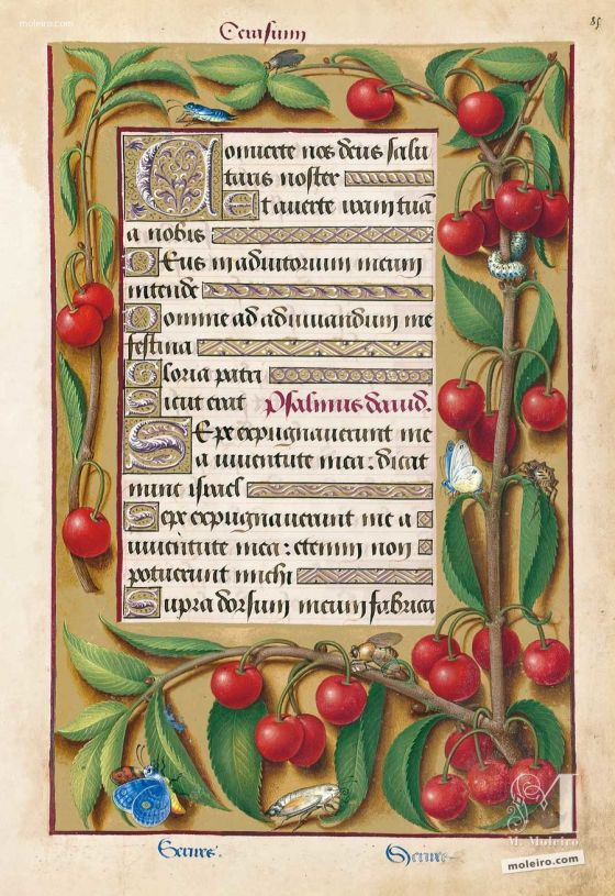 Folder of 5 prints from the Great Hours of Anne of Brittany f. 85r, Floral border with cherries