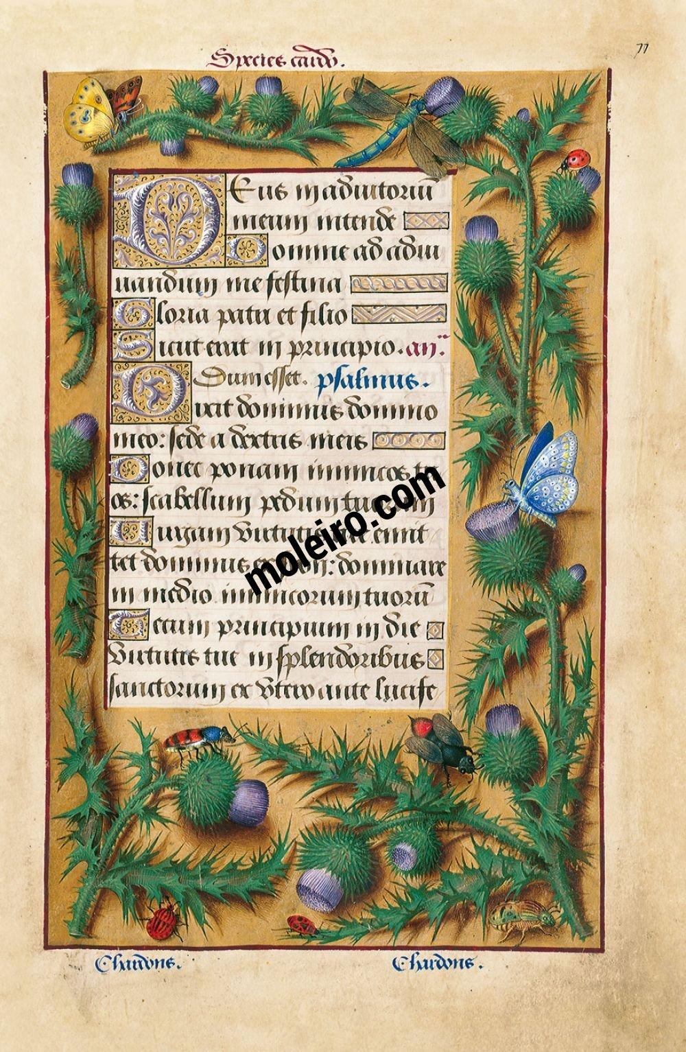 Las Grandes Horas de Ana de Bretaña f. 77r, Cardo