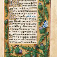Thistle, f. 77r