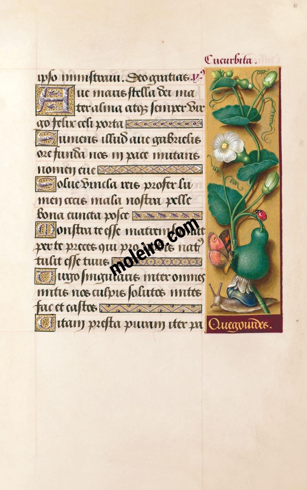 Die Grandes Heures der Anna von der Bretagne f. 81r, Kürbis