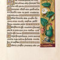 f. 81r, Calebasse