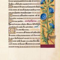 f. 31r, Achicoria