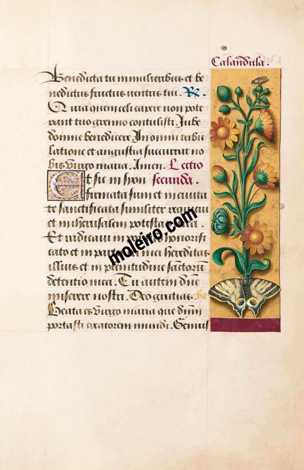 Great Hours of Anne of Brittany Marigold, f. 33r