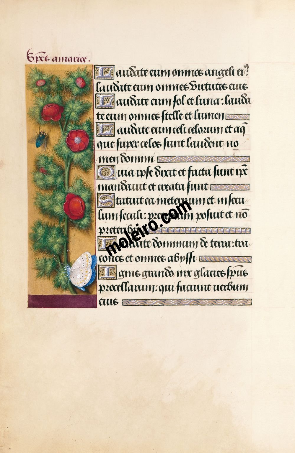 Great Hours of Anne of Brittany Summer pheasant's-eye, f. 41v