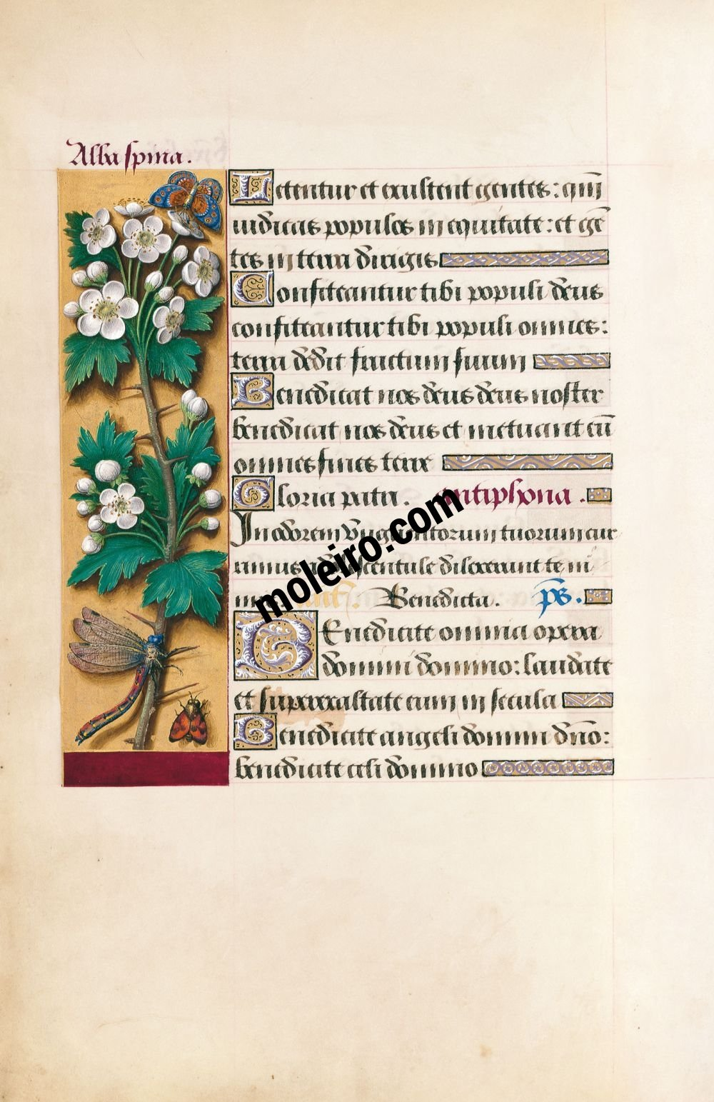 Great Hours of Anne of Brittany Hawthorn, f. 39v