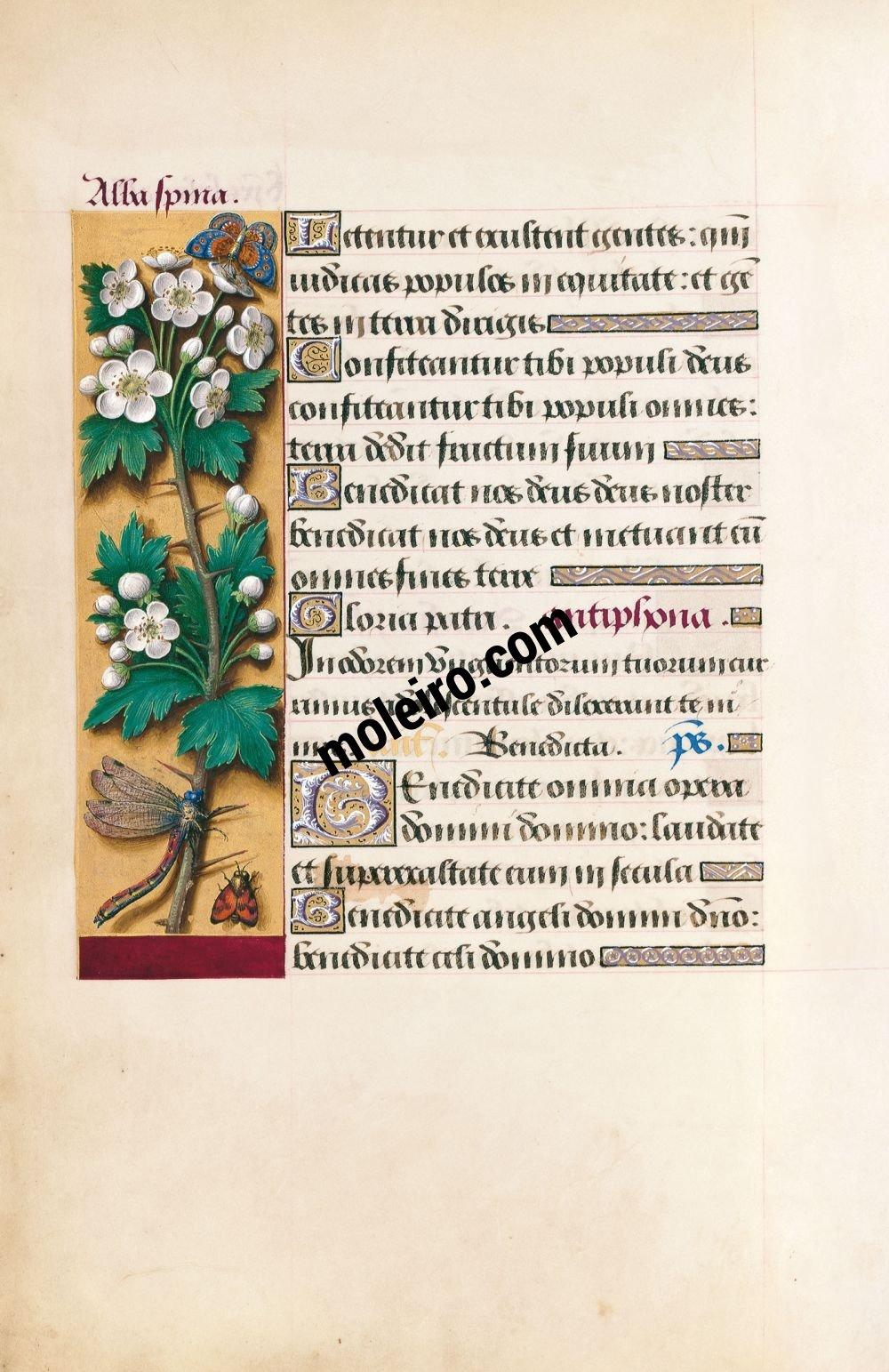 Grandes Heures d'Anne de Bretagne f. 39v, Aubépine