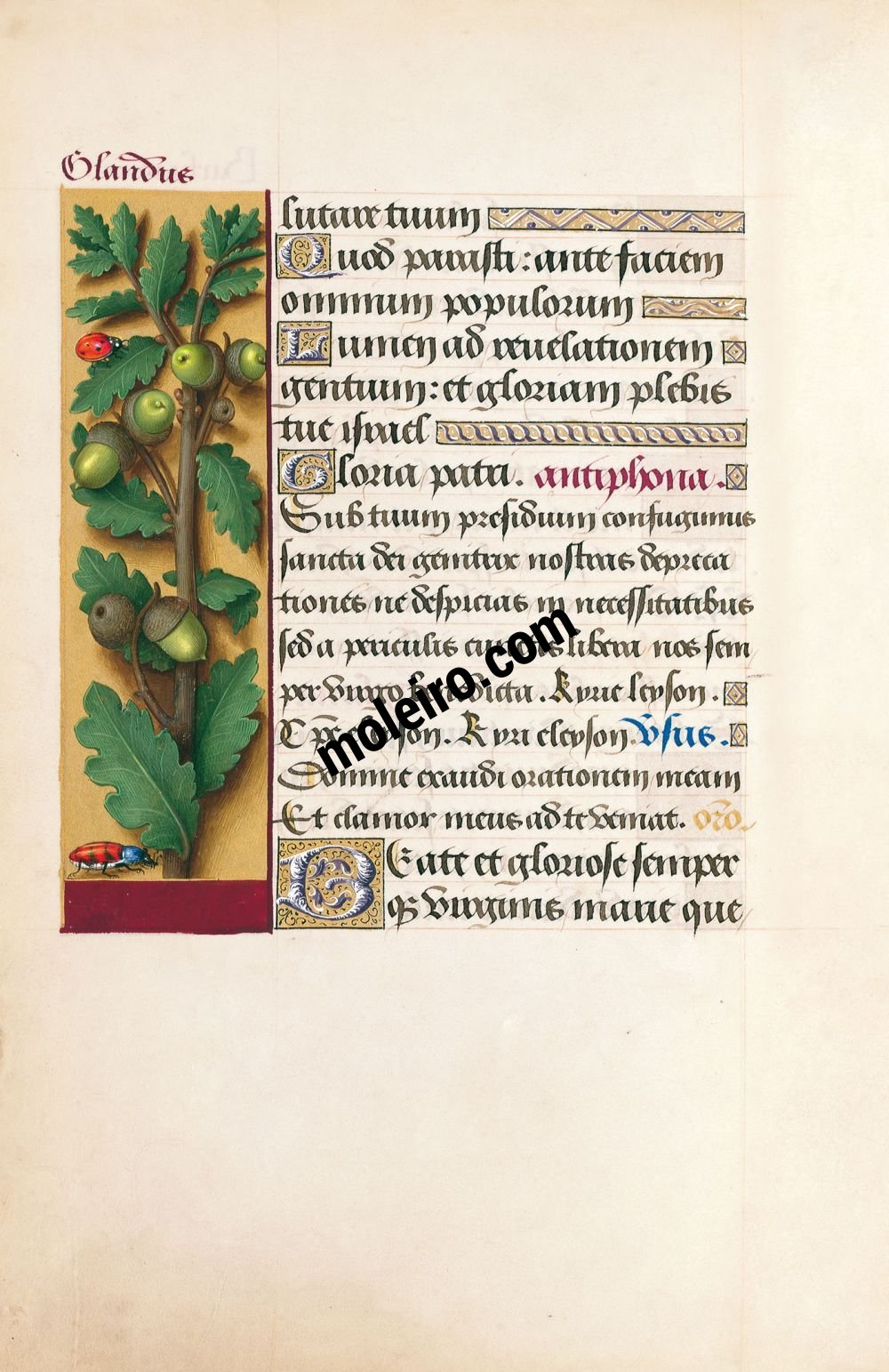 Great Hours of Anne of Brittany Oak, f. 87v