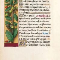 f. 87v, Chêne