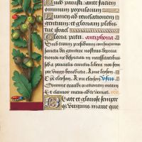 f. 87v, Roble albar
