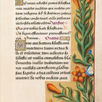 f. 176r, Lirio anaranjado