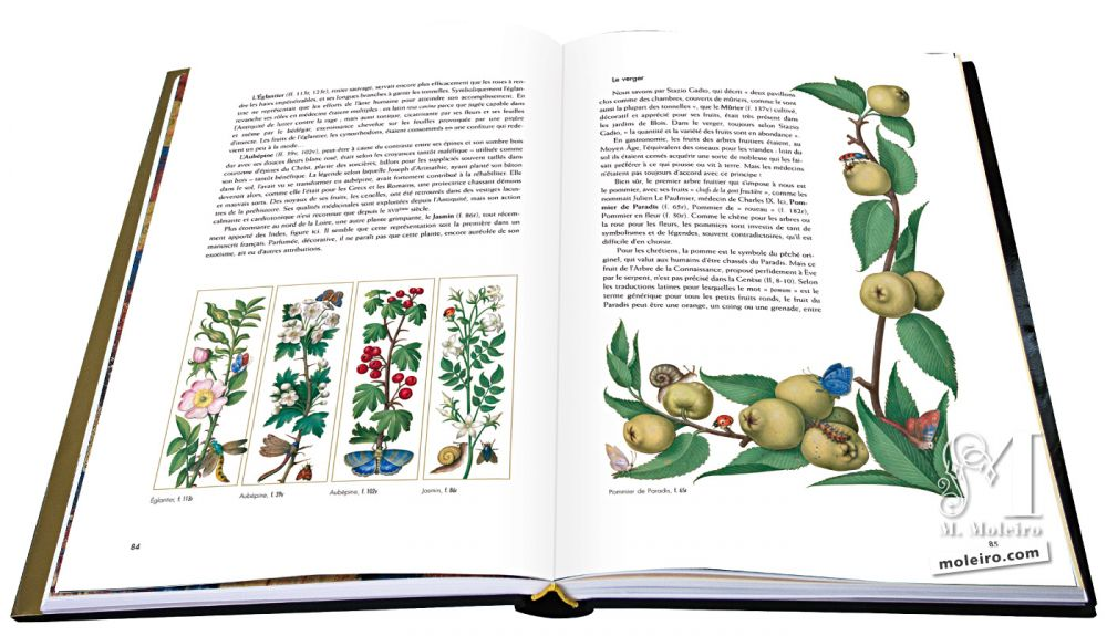 Great Hours of Anne of Brittany Apple Tree of Paradise (image on the right)