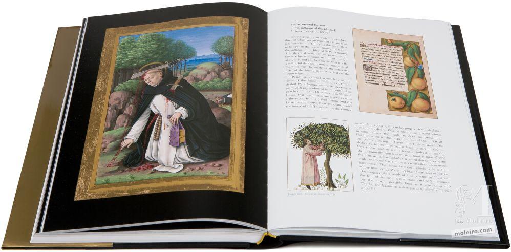 Gran Libro d'Ore d'Anna di Bretagna Morte di San Pietro Martire