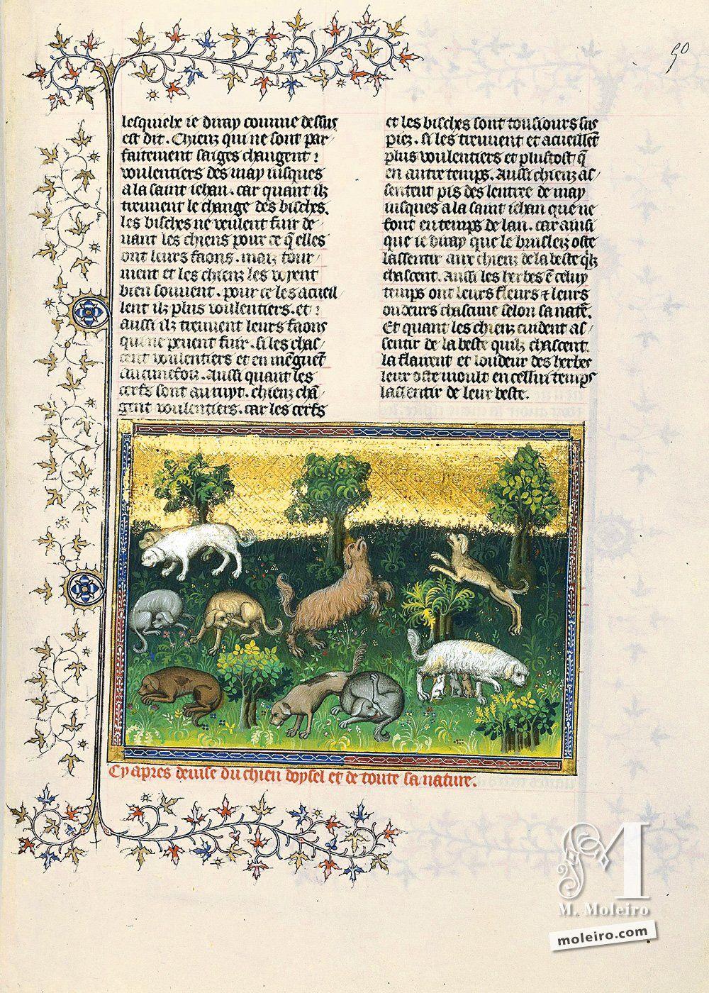 Livro da caça, de Gaston Fébus Em seguida, a descrição do cão perdigueiro e de toda a sua natureza - 50r