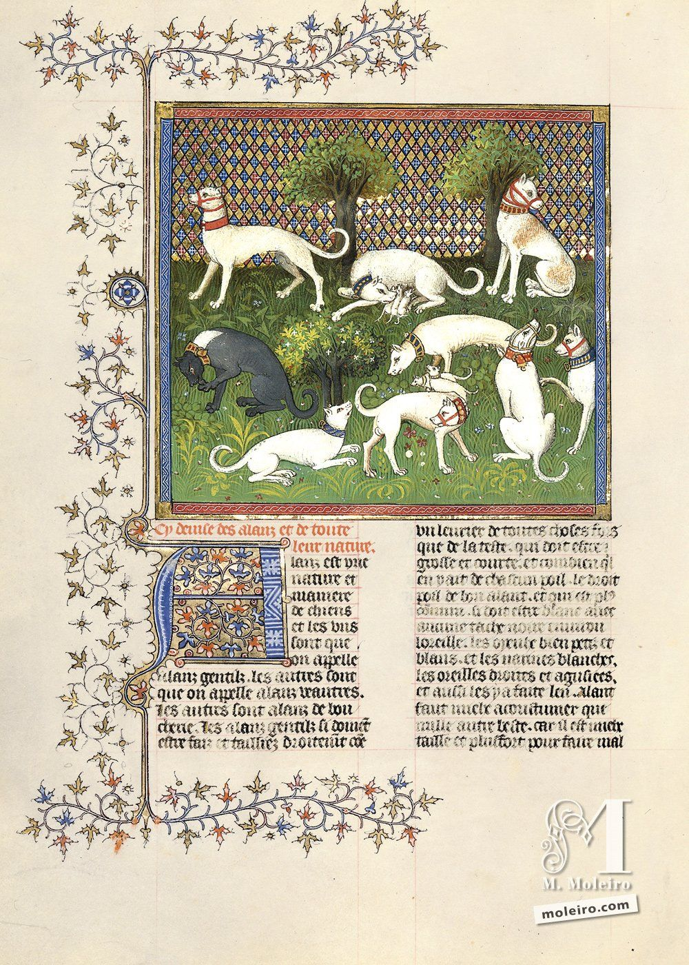 Of alaunts and their Nature - 45v. Livre de la Chasse, by Gaston Fébus (Français 616, Paris, early 15th c.) Bibliothèque nationale de France, Paris BnF