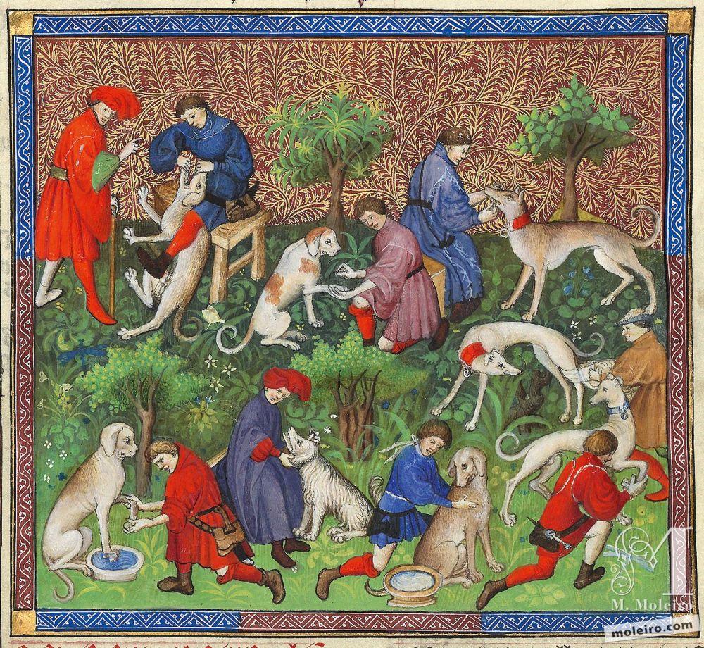 Libro de la caza, Gaston Fébus De las enfermedades de los perros y de sus características - f. 40v