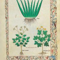 folio 112r