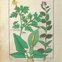 folio 113v