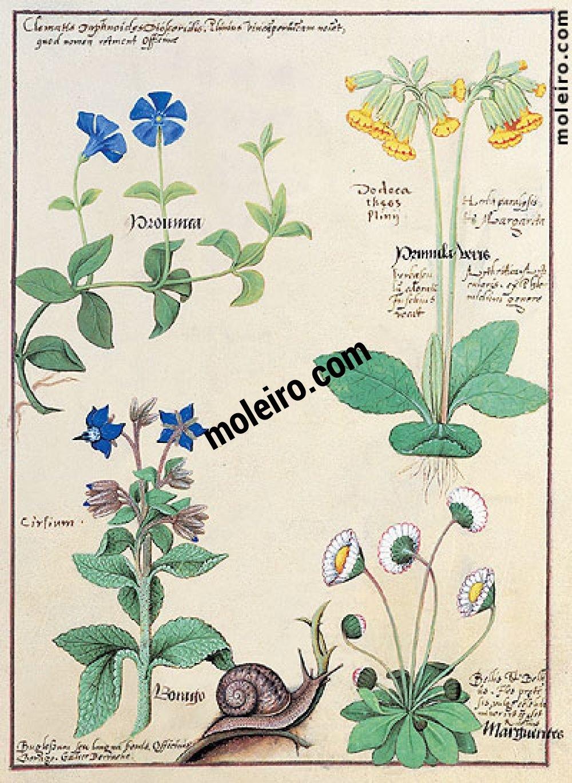 Livro dos Medicamentos Simples folio 114r