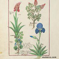 folio 114v