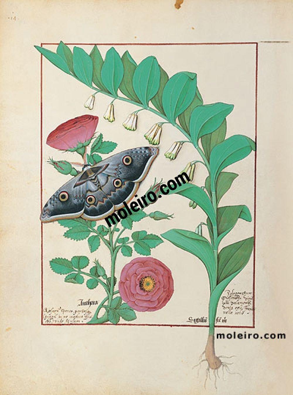 Das Buch der Einfachen Heilmittel folio 118v