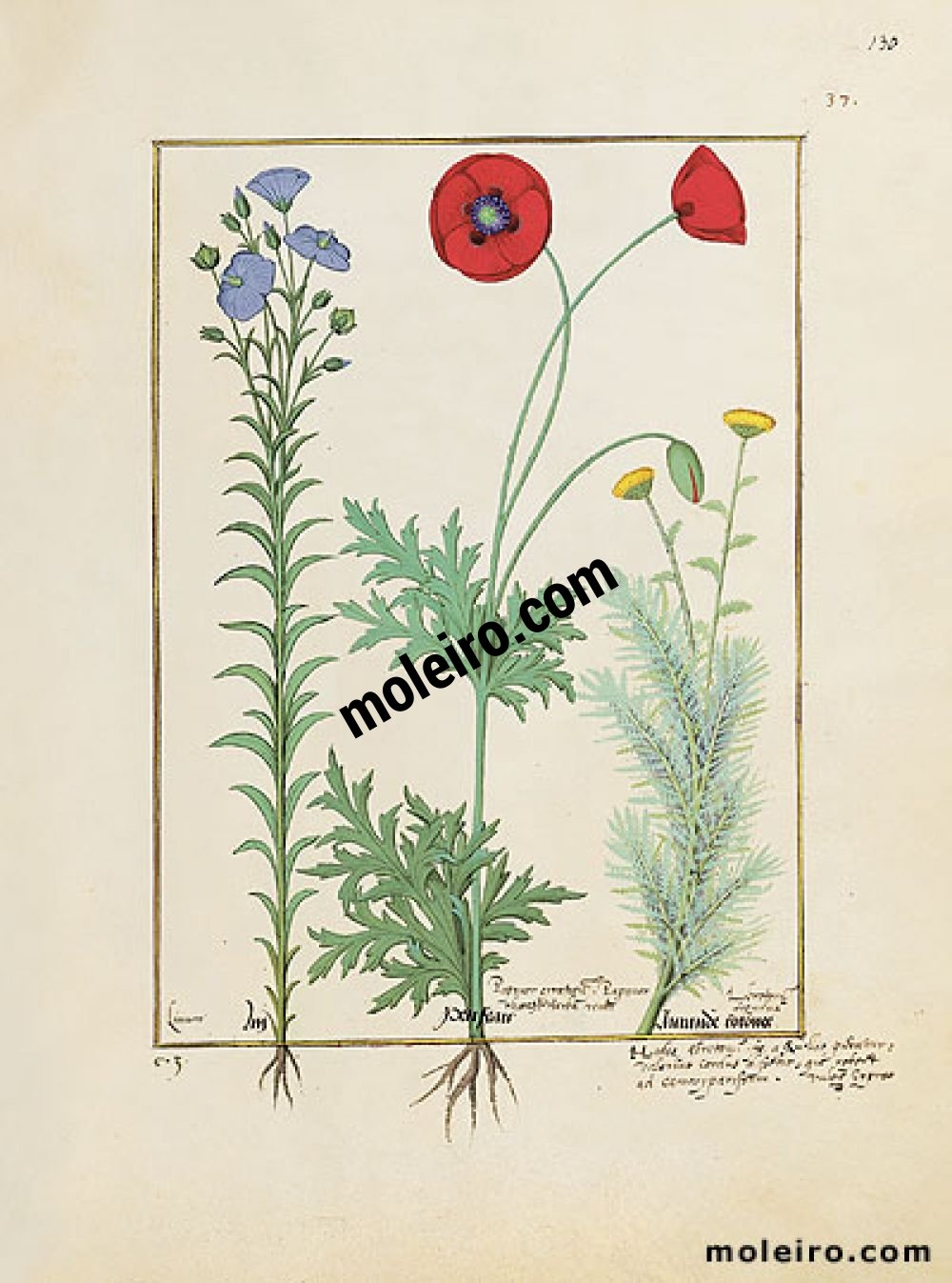 Das Buch der Einfachen Heilmittel folio 130r