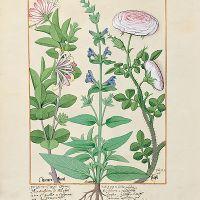 folio 132v
