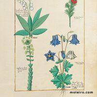folio 135r