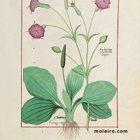 folio 144r