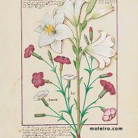 folio 149r