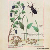 folio 155r