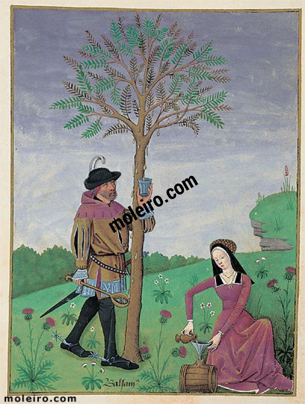 Das Buch der Einfachen Heilmittel folio 162v