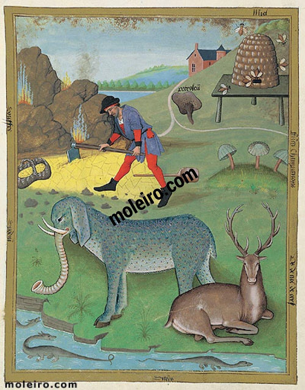 Libro delle Medicine Semplici folio 168v