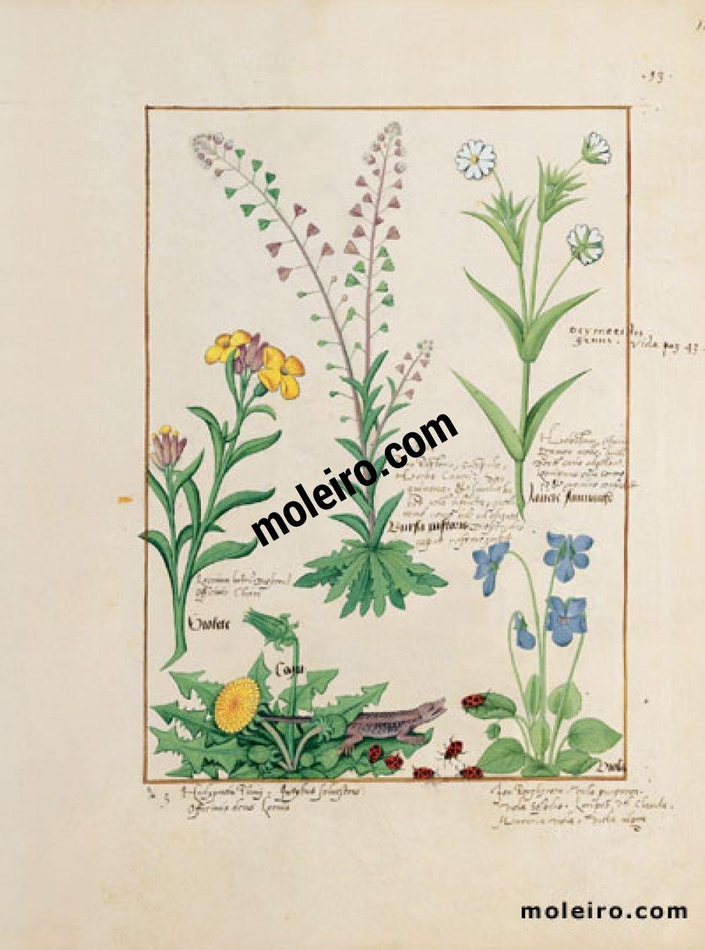 The Book of Simple Medicines folio 138r