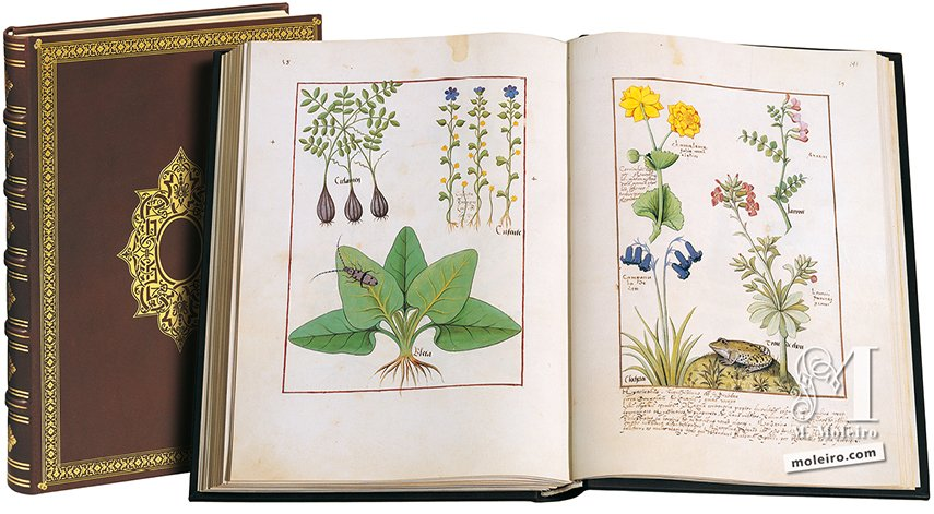 The Book of Simple Medicines National Library of Russia, St Petersburg National Library of Russia, St Petersburg