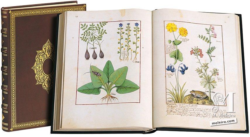 Libro de los Medicamentos Simples Biblioteca Nacional de Rusia, San Petersburgo Biblioteca Nacional de Rusia, San Petersburgo