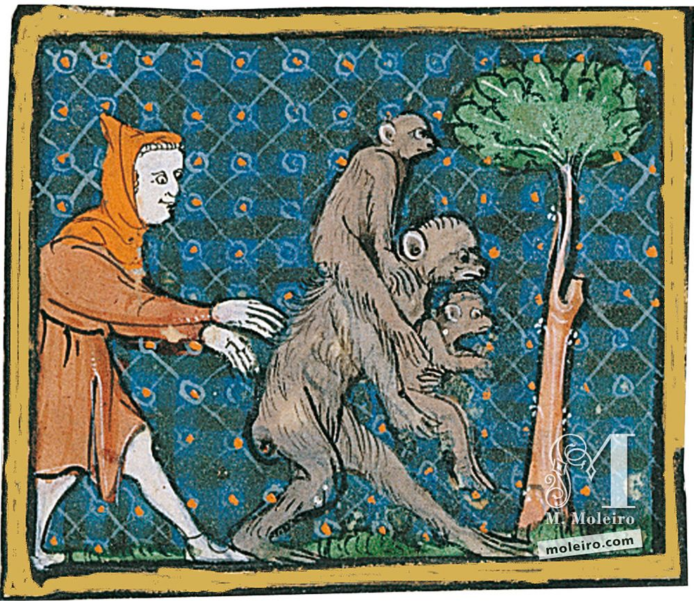 Book of Treasures f. 59r, The monkeys