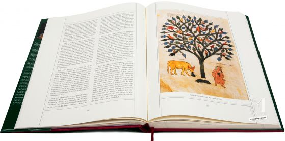 Beato de Liébana - Manuscritos Iluminados Sueño de Nabucodonosor. Beato Magio, f. 252 v.