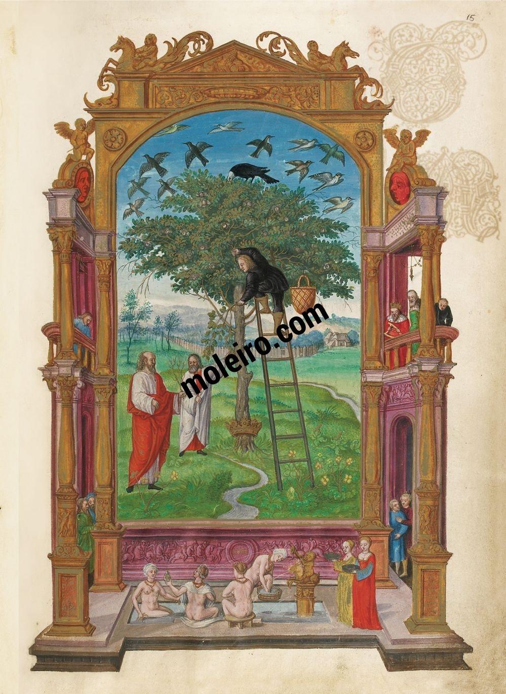 Splendor Solis Philosophical Tree, f. 15r