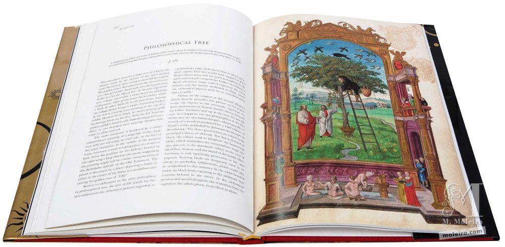 A árvore filosófica - Splendor Solis - Harley Ms. 3469 (1582, Alemanha) British Library