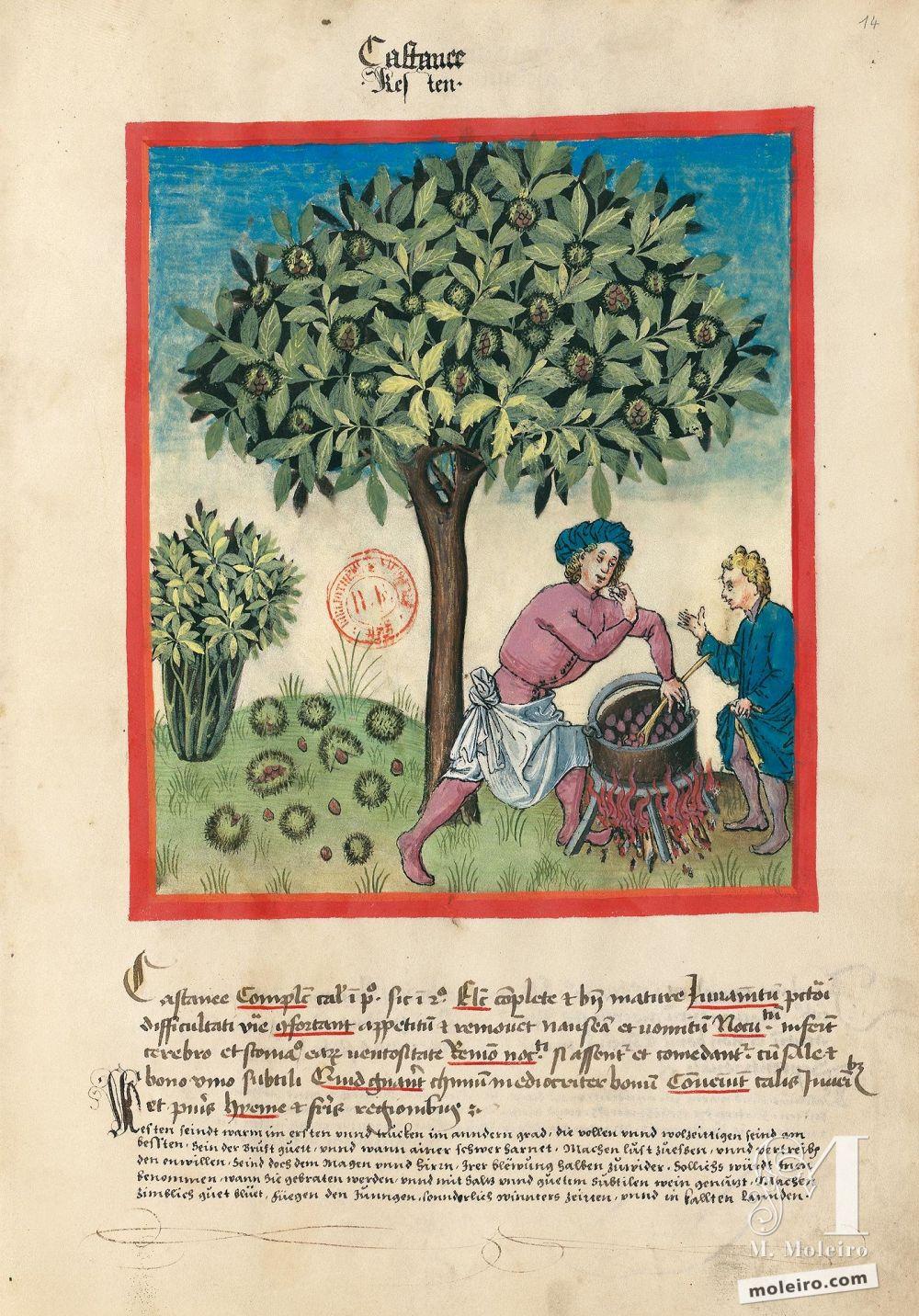 f. 14r, Castagne. Tacuinum Sanitatis, Ms. Lat. 9333. Bibliothèque nationale de France, Parigi