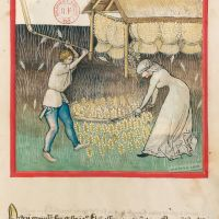 <p>f. 42r, Barley</p>
